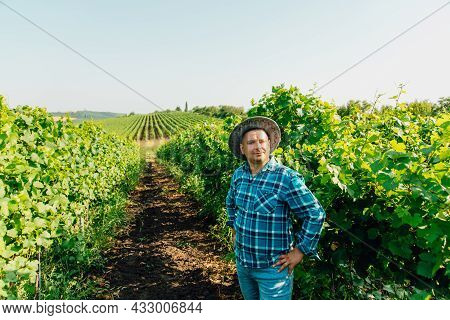 Top View Of Male Farmer Vinified In Vineyard. Young Male With Hat On A Sunny Summer Day.