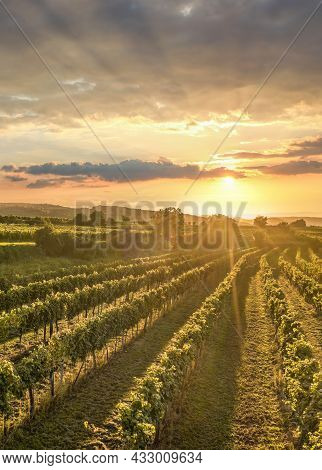 Colorful Sunset Over Vineyards In Wachau Valley, Lower Austria, Austria