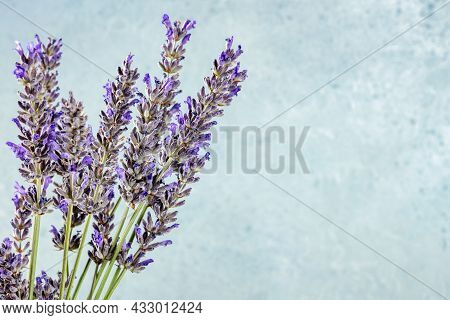 Lavender Flower Bouquet On A Blue Background With A Place For Text, A Bunch Of Lavandula Plants