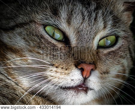 Face Of A Cat With Green Eyes Close Up.