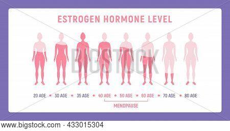 Estrogen Menopause Hormone Woman Level. Female Estrogen Sexual Cycle Level Concept