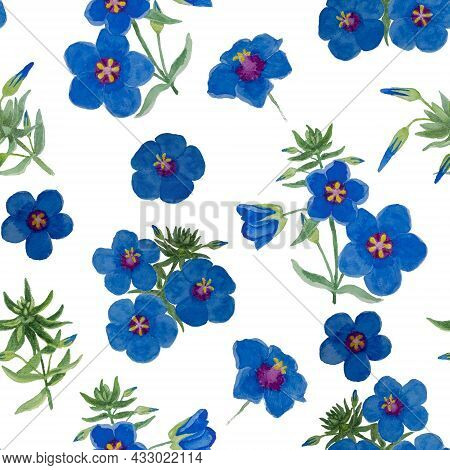 Watercolor Drawing Of Garden Pimpernel Flower Blossom On White Color Background, Blue Petals Floweri