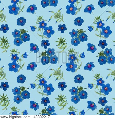 Watercolor Drawing Of Garden Pimpernel Flower Blossom On Blue Color Background, Blue Petals Flowerin