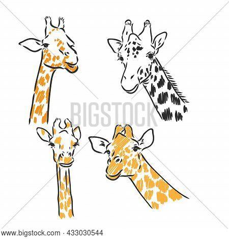 Giraffe - Isolated Vector With Spots Giraffe Vector Sketch