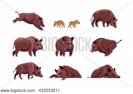 Set Of Wild Boar In Different Poses Looking, Running, Walking, Sleeping, Attack. Wild Forest Creatur