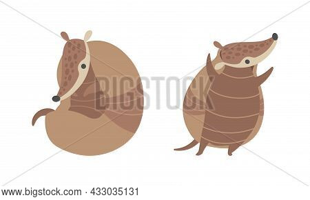 Cute Armadillo Character With Armor Shell Curled Up And Standing Vector Set