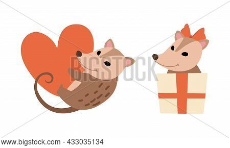 Cute Opossum Animal Holding Red Heart And Peeping Out From Gift Box Vector Set