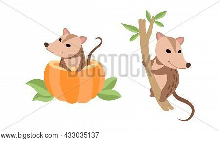 Cute Opossum Animal Sitting On Tree And Peeping Out From Pumpkin Vector Set