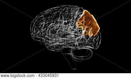 Brain Superior Parietal Lobule Anatomy For Medical Concept 3d Illustration