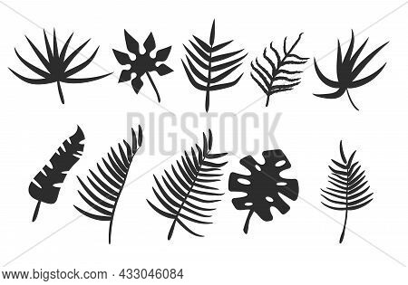 Black Leaves Or Foliage Silhouettes Isolated On White Background. Set Of Vector Tropical Leaf Shapes