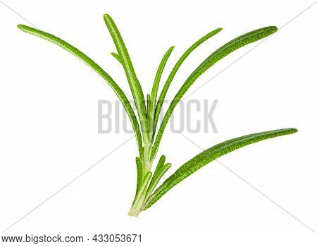 Rosemary Isolated On White Background With Clipping Path.