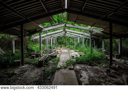 The Interior Of An Abandoned Overgrown Concrete Industrial Building With A Dilapidated Roof.