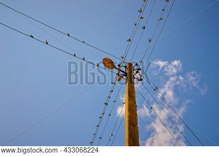 A Flock Of Swallows Against The Blue Sky On An Electrical Support On Wires.
