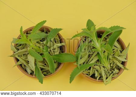 Stevia Rebaudiana.natural Sugar Substitute. Dry And Fresh Stevia In Cups On Yellow Background.organi