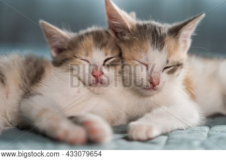 Two Cute Kittens Sleep On A Blue Blanket. Sweet Dream Of Your Beloved Pets. The Joy That Animals Bri