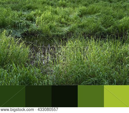 Lush Swamp Grass Growing In A Paper Bark Forest Wetlands Ecosystem, Color Palette Attached