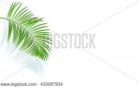Green Palm Leaf And Its Shadow On A White Wall. Tropical Background With Empty Place For Text