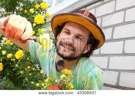 Man Cutting The Rose Bush
