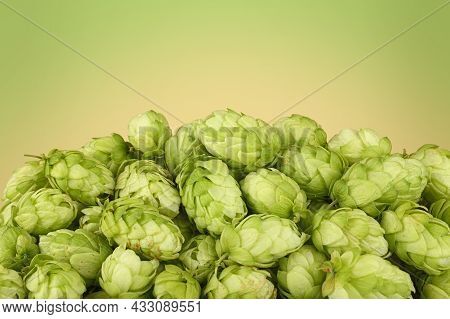 Close Up Heap Of Fresh Green Hops, Ingredient For Beer Or Herbal Medicine, Over Green And Beige Back