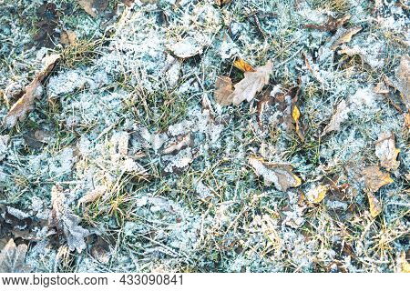 The Beautiful Closeup Of The Snowy Glade In The Sun On The Grass And Leaves. The Picturesque Winter