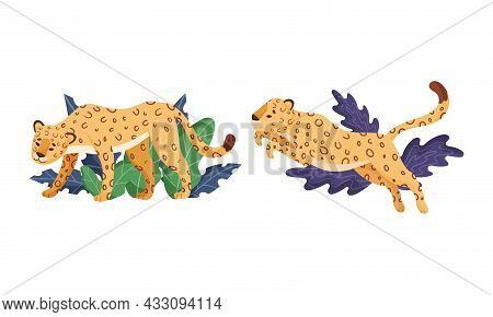 Spotted Leopard Or Jaguar With Yellow Skin Standing And Jumping In Tropical Leaves Vector Set