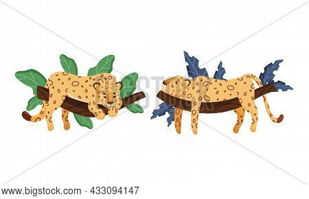 Spotted Leopard Or Jaguar With Yellow Skin Lying On Tree Branch With Tropical Leaves Vector Set
