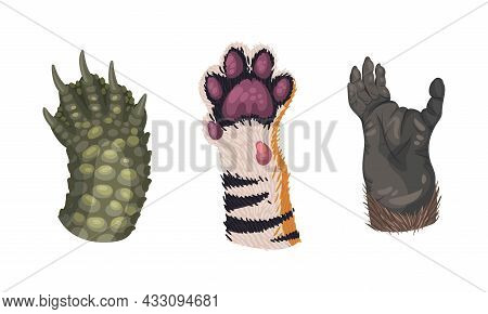 Animal Limb With Primate And Tiger Hairy Paw Vector Set