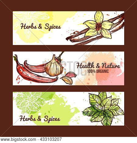 Natural Organic Herbs And Spices Horizontal Banners Set Isolated Vector Illustration