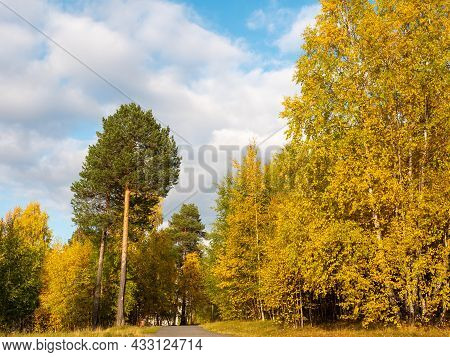 Bright Golden Autumn. Yellow And Green Trees Stand Near The Footpath.