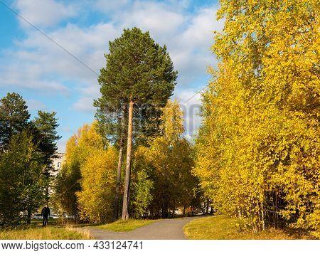 Noyabrsk, Russia - September 15, 2021: Bright Golden Autumn. Man Walks Along A Footpath Through Yell