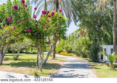 Flowers And Trees Along Beach Promenade In Side, Turkey