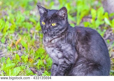 Beautiful Cute Cat With Yellow Eyes Green Nature Background Minsk.