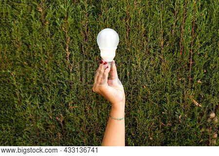 Woman Hand Holding A Light Bulb On A Cypress Trees Background With Copy Space