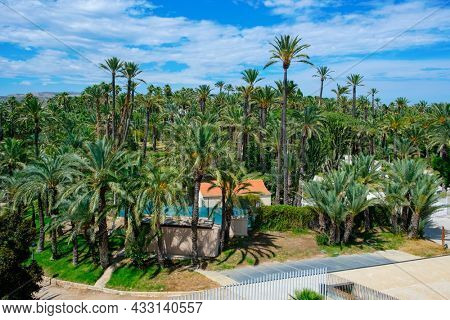 a view over the famous Palmeral de Elche, or Palm Grove of Elche, a public park with many palm trees in Elche, in the Valencian Community, Spain