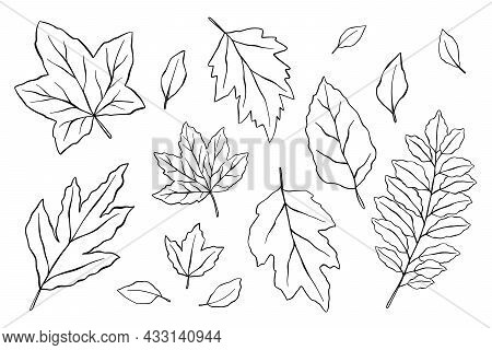 Vector Hand Drawn Set Of Silhouette Leaves In Outline On White Background. Set Of Line Drawn Leaves.