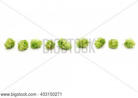 freshly harvested hops isolated on white background