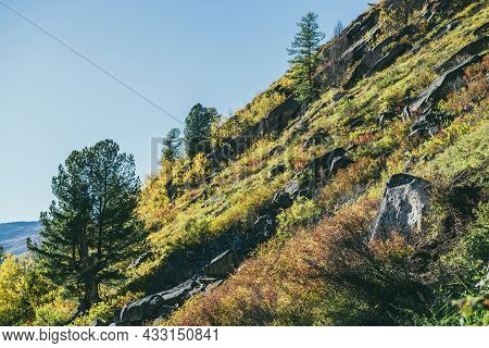 Colorful Mountain Landscape With Wild Flora In Autumn Colors On Steep Mountainside In Golden Sunligh