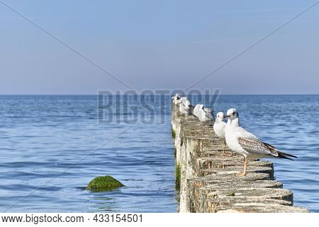 Seagulls On Wooden Posts As Breakwaters On The Baltic Beach. Beautiful Seascape.