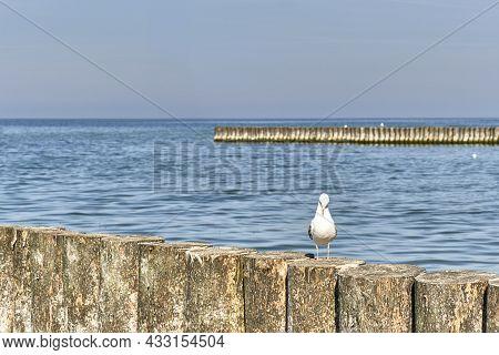 Seagull On Wooden Breakwater On The Baltic Beach. Beautiful Seascape.