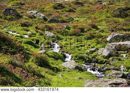 A Small Mountain River, Stream Meanders Down The Hill Between Lush Green Flower Meadows In The Swiss