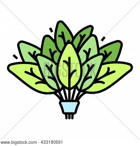 Spinach Branch Icon. Outline Spinach Branch Vector Icon Color Flat Isolated On White