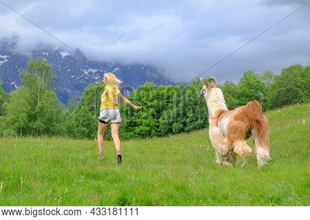 Woman Running With Llama Alpaca On Top Of Comino Mount In Switzerland At Sunset. Centovalli Valley I