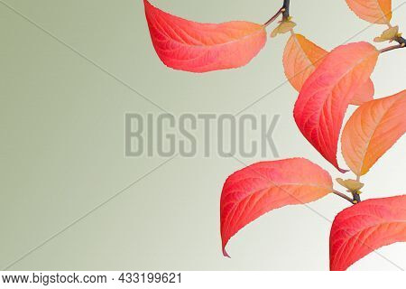 Collage Of Isolated Red Orange Bright Autumn Leaves On Light Green Background With Copy Space. Octob