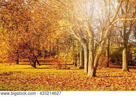 Beautiful City Park With Fallen Yellow Leaves