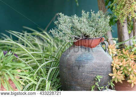 Reused Planter Ideas. Old Broken Vase Turn Into Garden Flower Pots. Recycled Garden Design, Diy And