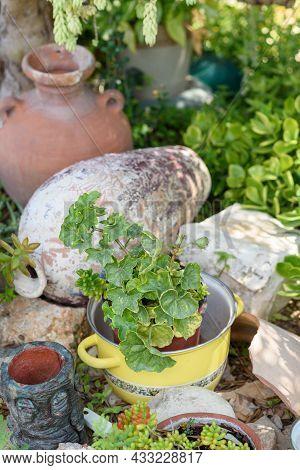 Reused Garden Design Ideas. Old Saucepans, Old Vases Turn Into Garden Flower Pots. Recycled Garden D