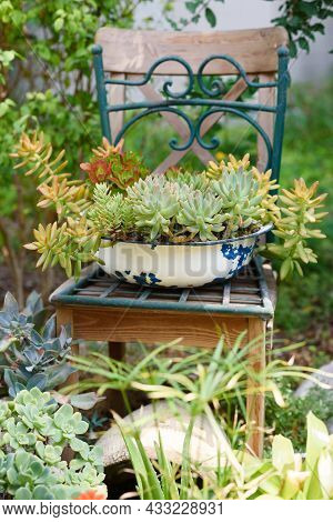 Reused Planter Ideas. Old Basin Turn Into Garden Flower Pots. Recycled Garden Design, Diy And Low-wa