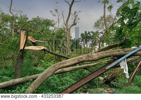 Super Cyclone Amphan Has Uprooted Tree Which Fell On Ground. The Devastation Has Made Many Trees Fal