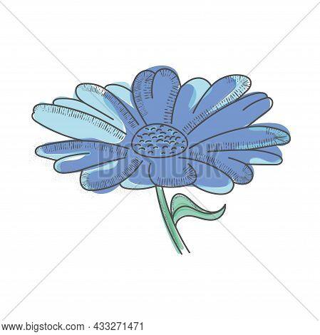 Sketch Of A Blue Daisy Flower Vector Illustration