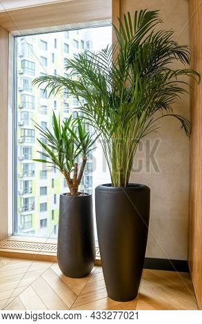 Interior Decor With Plants, Detail Of Modern Home Or Office Indoor. Natural Design, Green Plants In